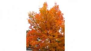 「秋」といえば、どんな曲を歌うのか?