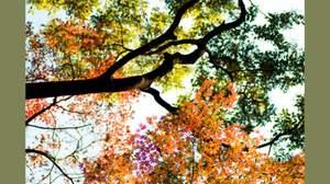 秋の歌と言えば、有無を言わさず「秋桜」