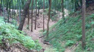 【連載】中島卓偉の勝手に城マニア 第36回「小机城(神奈川県)卓偉が行ったことある回数 3回」