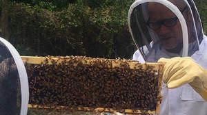 レッチリのフリー、蜂を飼育中