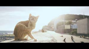 """「拝啓エド・シーラン様」福岡の""""猫島""""相島が猫好きのエドにメッセージ"""